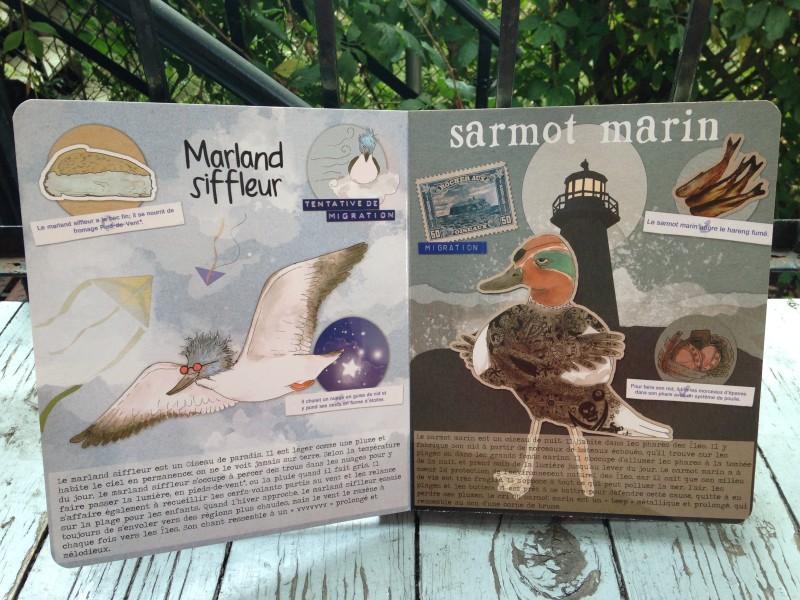 Les Emplumés - drôles d'oiseaux des Îles de la Madeleine