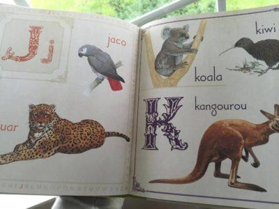 Animaux colorés - documentaires sur les animaux