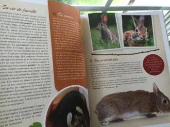 Les mammifères de chez nous - documentaires sur les animaux