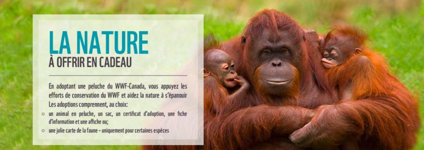 Les espèces en voie d'extinction -Adopter un animal avec WWF